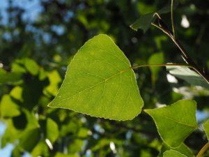 leaf-671664_1280